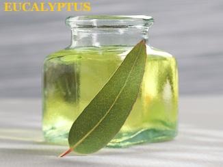 eucalyptus oil 1234